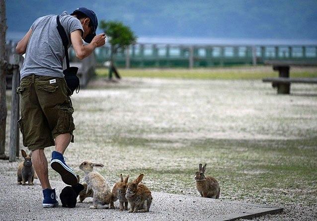 9-rabbits