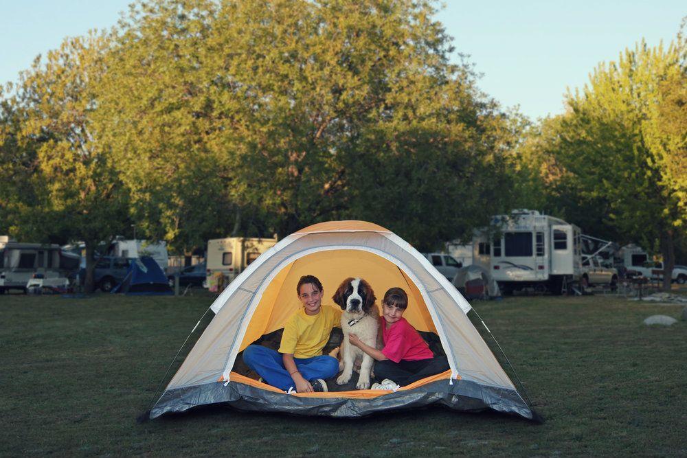 Ir de camping con perro