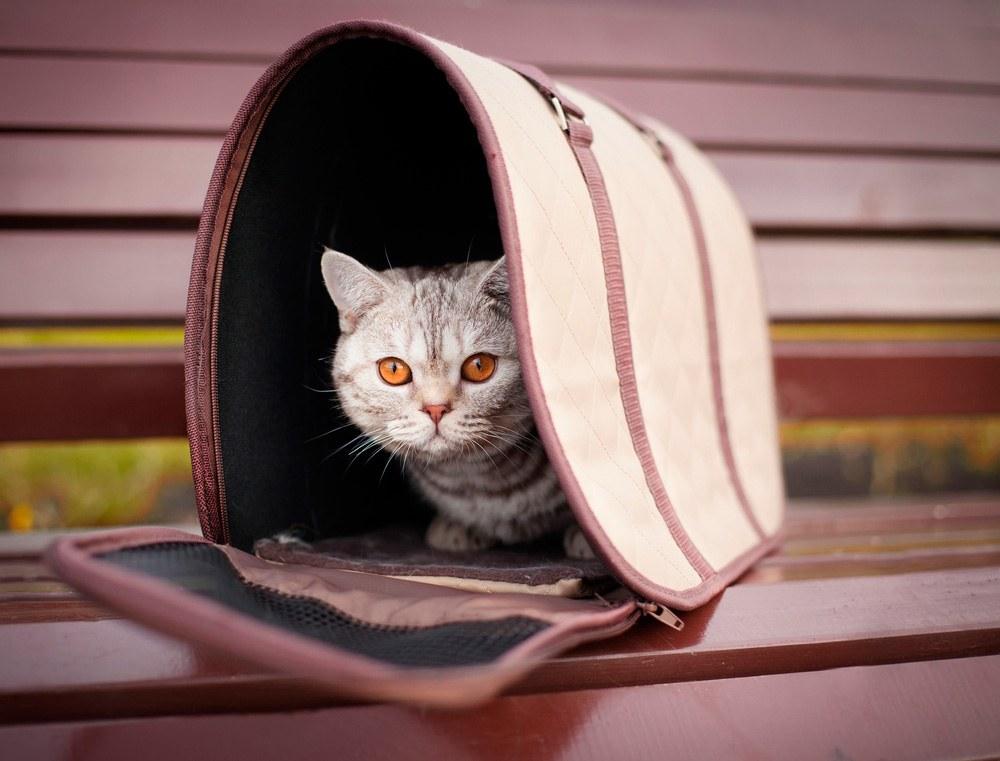 Viajar con gato