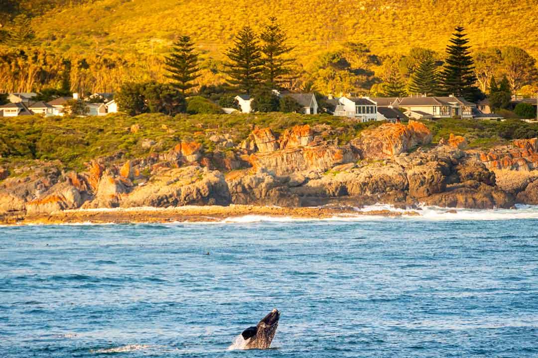 La mejor epoca para viajar a Sudafrica y ver las ballenas es de junio a diciembre
