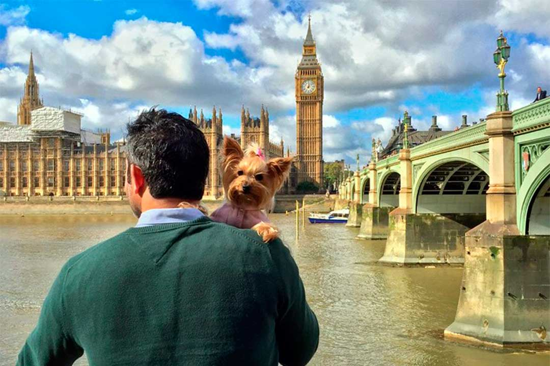 The WoTME travel blogger puesta por un sgeuro de viaje para mascotas