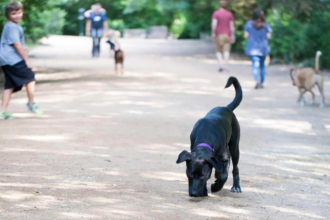 austin aparece en las listas de ciudades pet friendly del mundo