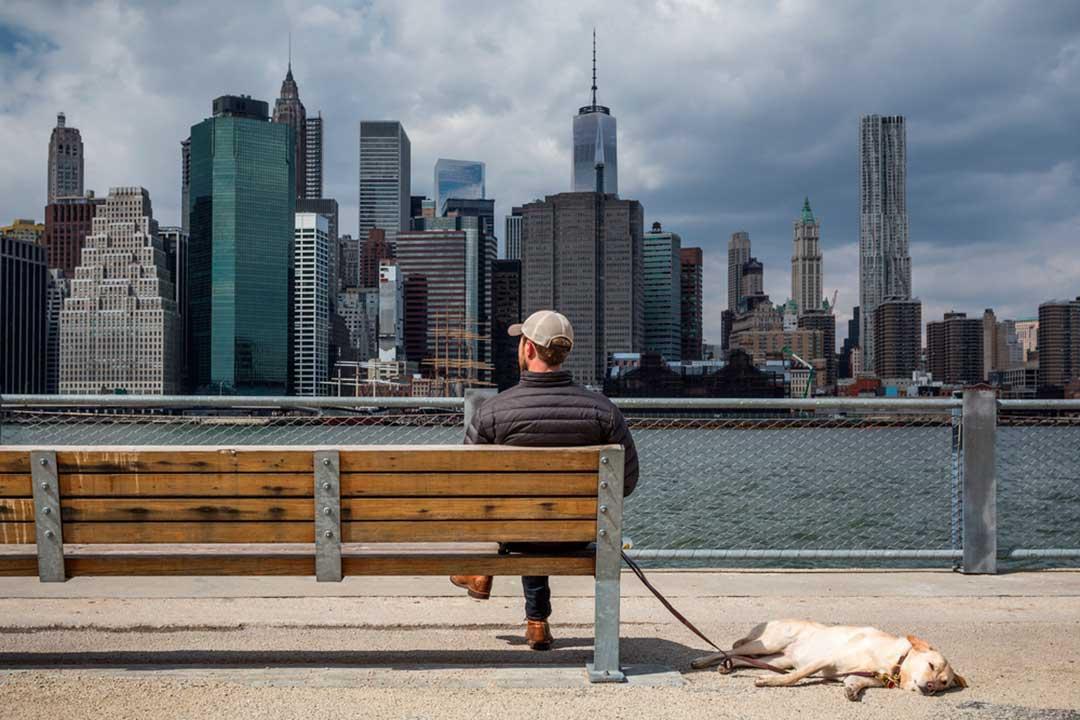 Puedes viajar a NY con tu mascota con tranquilidad